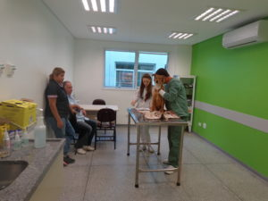 cães participam de pesquisa com células tronco no Hospital Veterinário da PUCPR