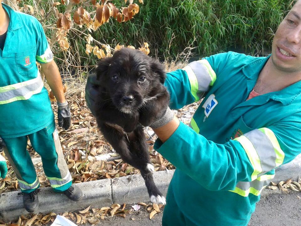 cachorro é achado no lixo, em Curitiba
