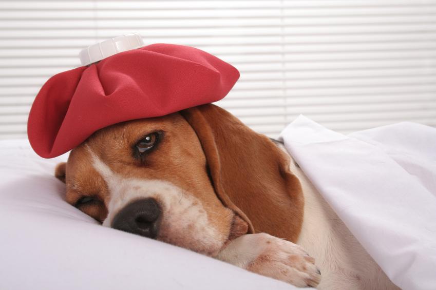É preciso ter cuidado com a saúde dos pets no tempo seco e frio