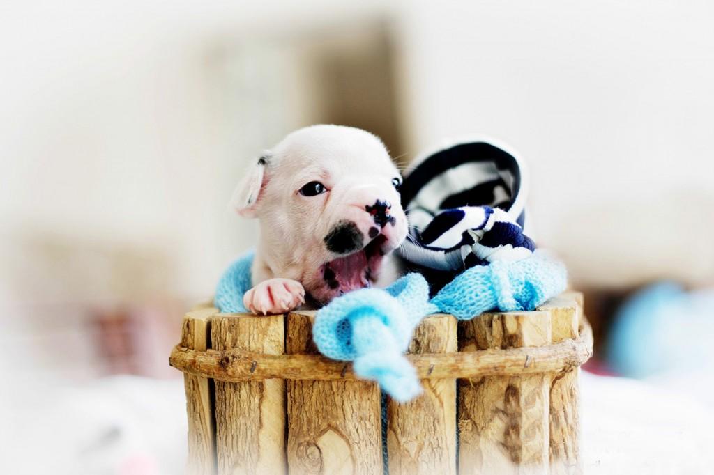 cachorrinho foto newborn