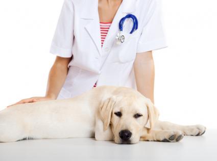 Cãncer em pets tem tratamento