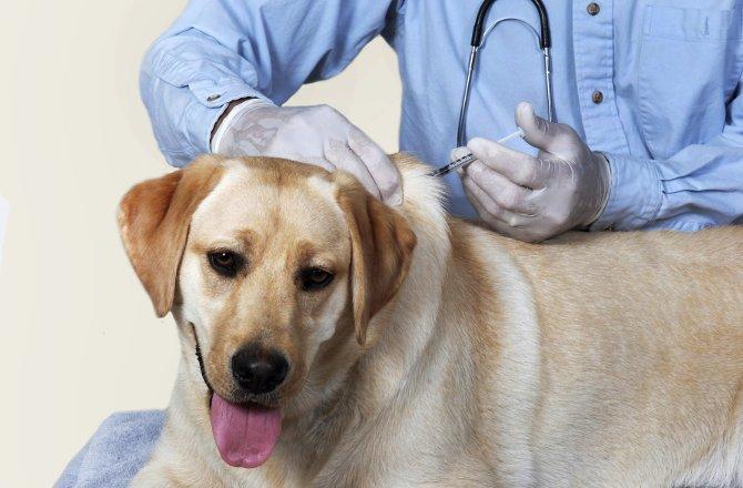 Câncer em pets tem tratamento