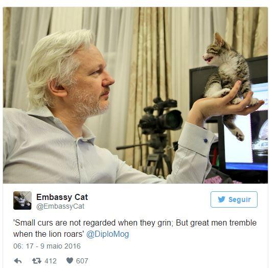 Gato de Assange agora tem perfil no Twitter