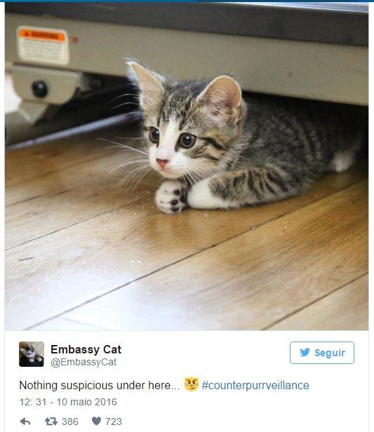 Embassy cat tem perfil no Twitter