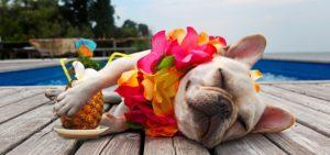 Pet aproveitando férias