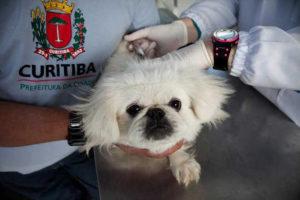 Castração animais prefeitura Curitiba castramóvel