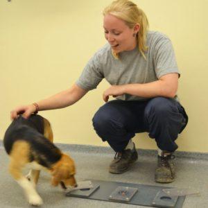 Um dos cães trabalha na resolução de tarefas com a pesquisadora Mia Persson