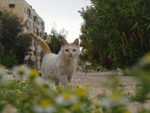 Gato resgatado em Aleppo, por Mohammad. (Foto: Reprodução/Facebook)