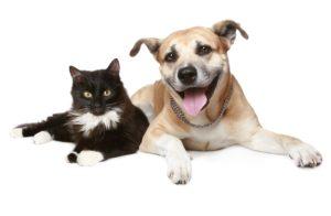 Cachorros e gatos podem comer menos no verão
