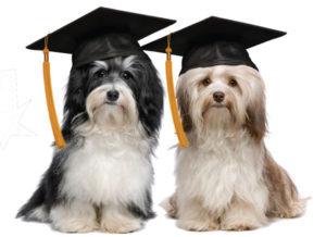 comportamento canino dicas para treinar seu cachorro