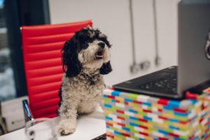 Brew Dog incentiva funcionários a levarem animais para empresa