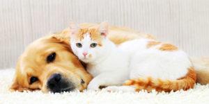 Itens que prejudicam saúde dos pets