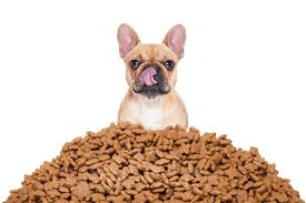 É preciso cuidar da alimentação dos pets