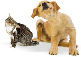 cachorro e gato se coçam. Atopia