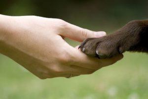 você tem condições de adotar um animal?
