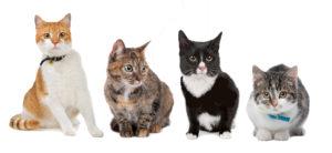 Saiba principais cuidados com a saúde dos gatos
