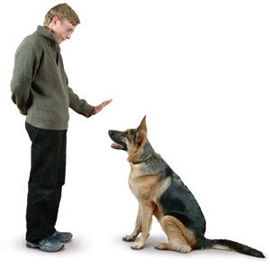 como treinar cachorro em casa