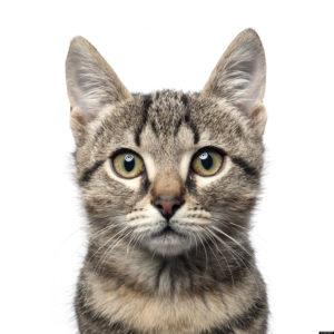 veja dicas do que não fazer com o seu gato