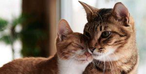 Saiba alguns passos para ter sucesso na adaptação de gatos