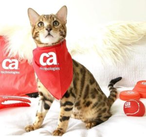 gato CA Technologies